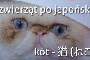 nazwy-zwierzat-po-japonsku